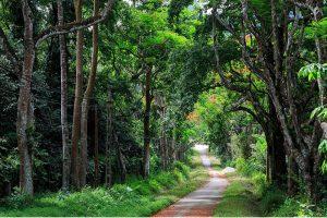 Top 4 des destinations à visiter absolument à Ninh Binh, Vietnam